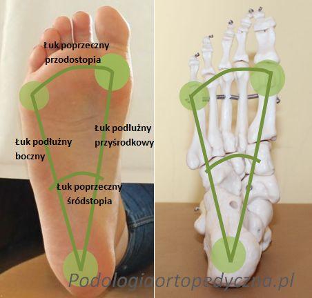 System stabilizacji stopy - podstawy - PODOLOGIA ortopedyczna