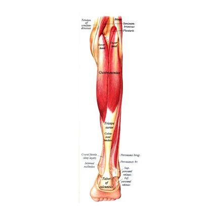 Przykurcz mięśnia trójgłowego łydki